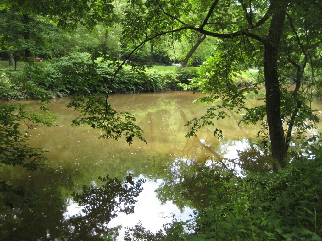 Rock Creek, which runs through the center of DC, absorbs raw sewage with every heavy rainfall.