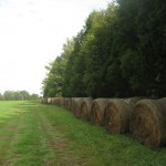 Brawner Farm bales